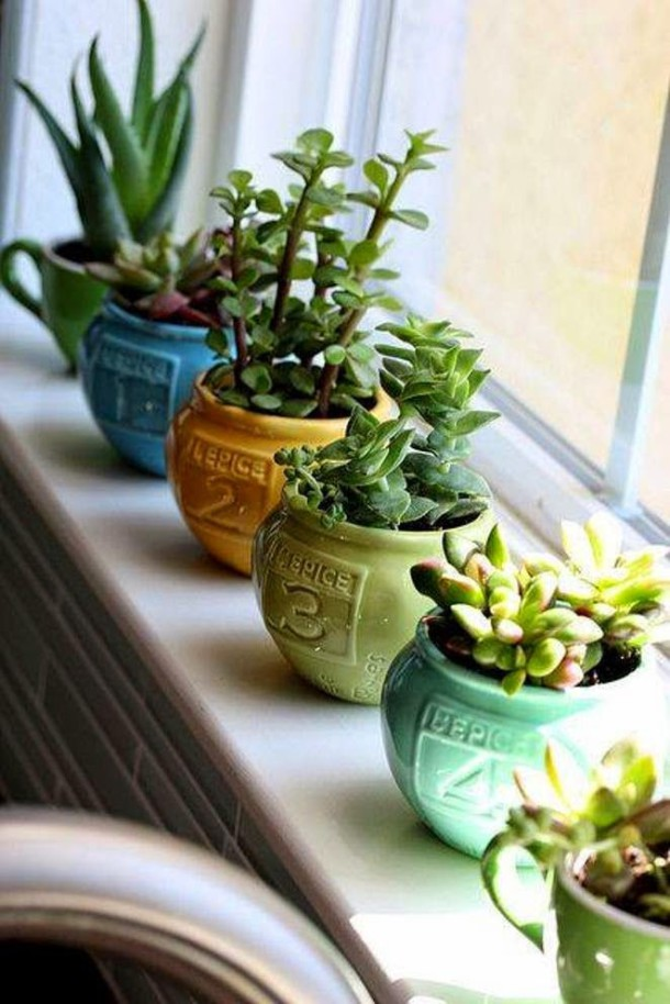 diy plantas em casa 1