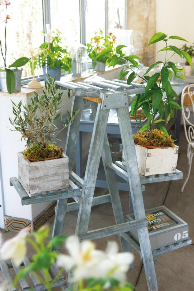 diy plantas em casa 10