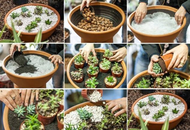diy plantas em casa 3