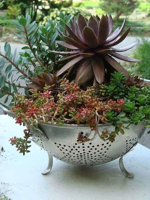 diy plantas em casa 7