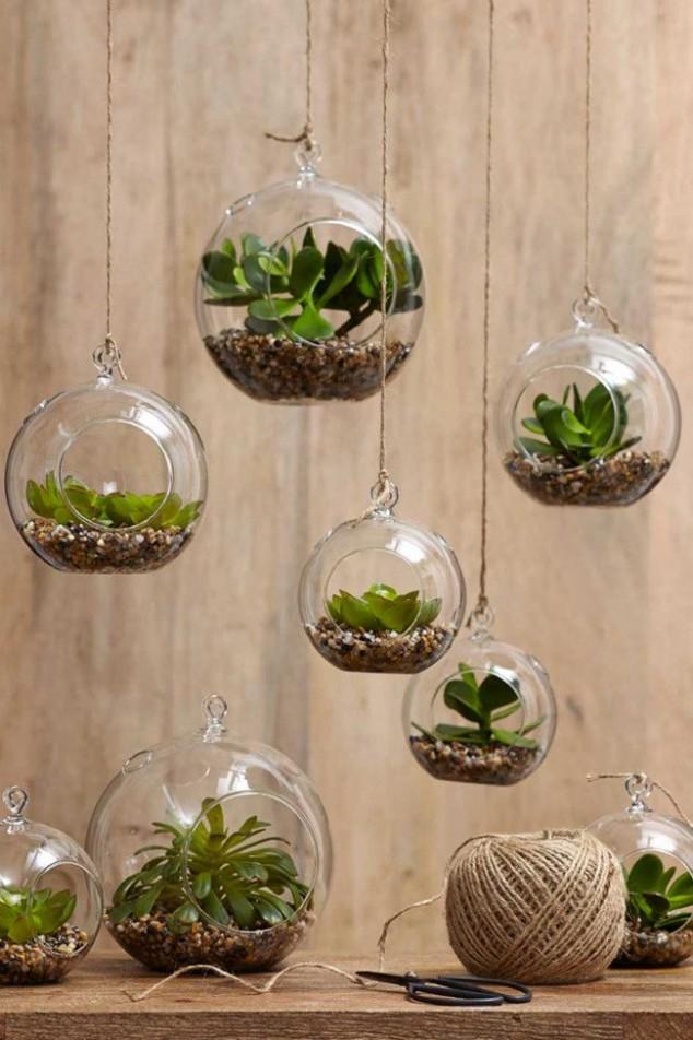 plantas dentro de casa 1