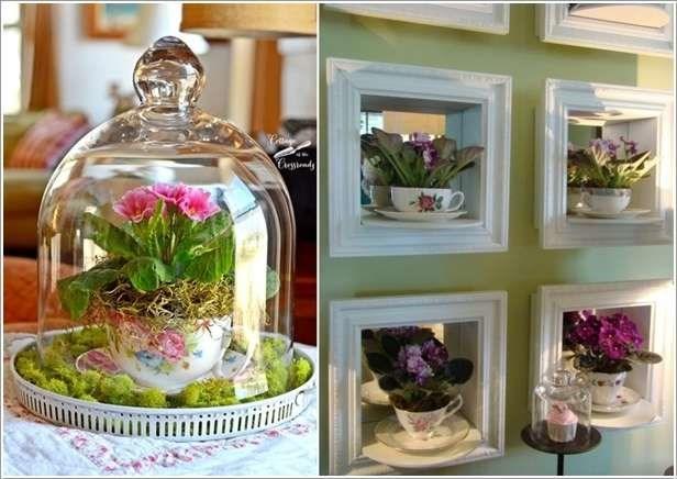 plantas-dentro-de-casa-12
