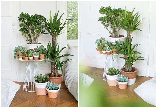 plantas-dentro-de-casa-4