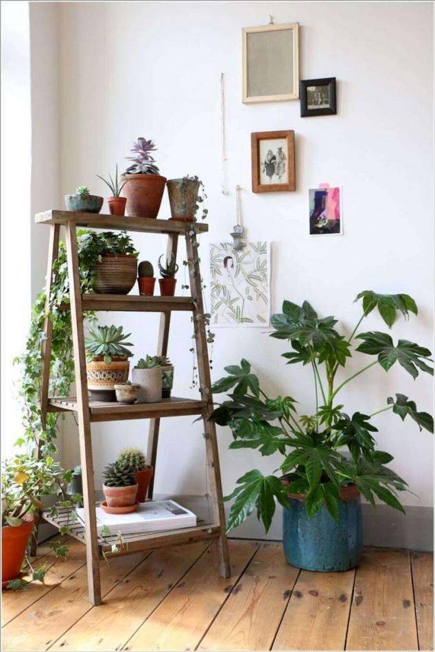 plantas-dentro-de-casa-5